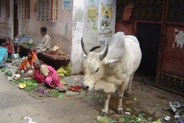 FOTOIndia28