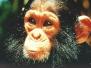 Kenya 2003
