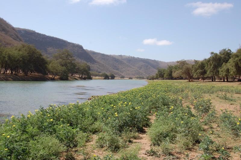 Oman123