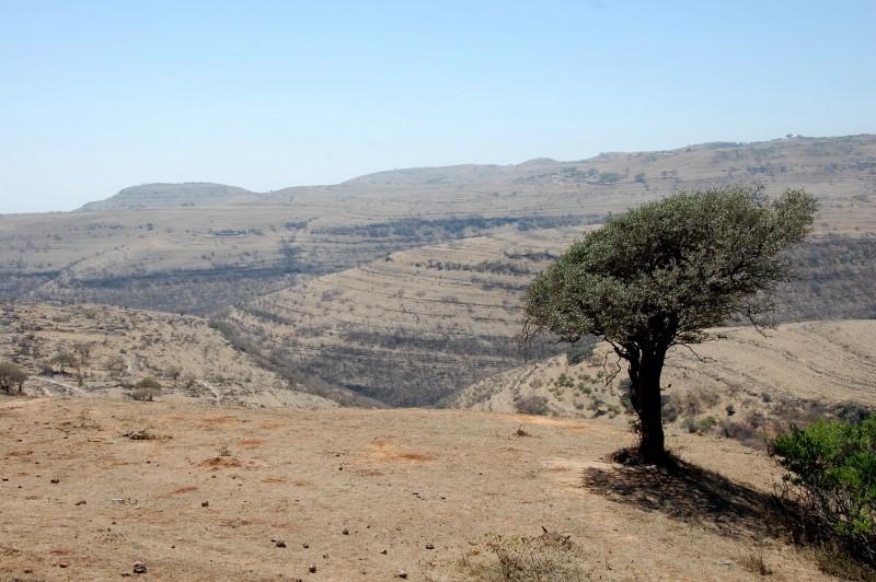 Oman156