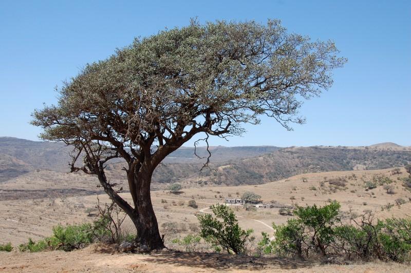 Oman157