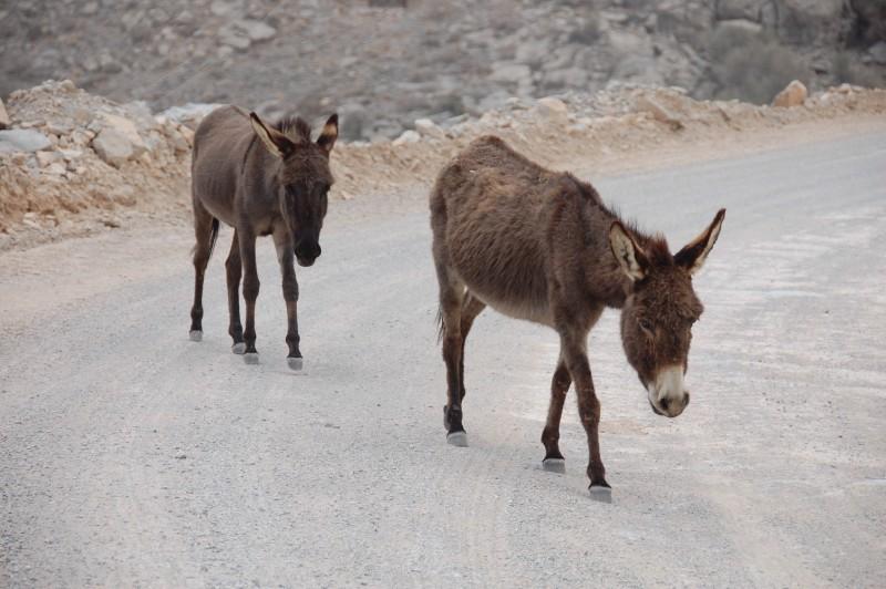 Oman165
