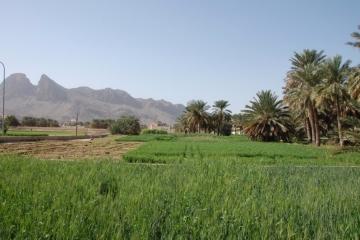 Oman054