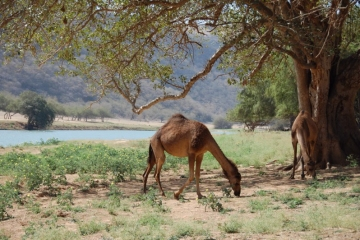 Oman125