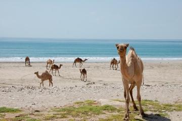 Oman127