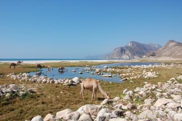 Oman146