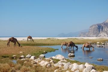 Oman147