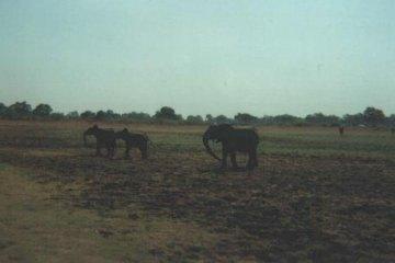 ZAMBIAFOTO04