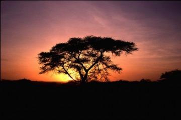 ZAMBIAFOTO09