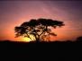 Zambia 2003