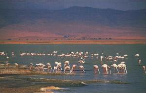 Tanzania 2003