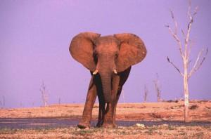 Zimbabwe 2003