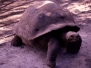 Galapagos 2003